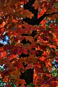 Turning Leaves Prints - Natures Artistic Beauty Print by Patrick Witz