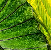Nature's Artistry Print by Jordan Blackstone