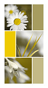 Art Collages Framed Prints - Natures Beauty Golden Flowers Collage Framed Print by Christina Rollo