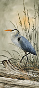 Heron Art - Natures Beauty by James Williamson