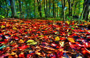 Natures Carpet In The Fall Print by Dan Friend