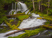 Falls Photos - Natures Course Through Moss by Mike Reid