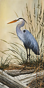 Herons Framed Prints - Natures Grace Framed Print by James Williamson