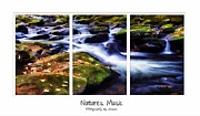 Natures Music Print by Darren Fisher