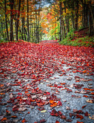 Fall Leaves Framed Prints - Natures Red Carpet Framed Print by Edward Fielding