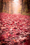 Woods Photos - Natures Red Carpet Revisited by Edward Fielding