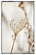 LeeAnn McLaneGoetz McLaneGoetzStudioLLCcom - Natures Snow Cone