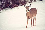 Karol  Livote - Natures Winter Visit