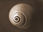 Deborah Smith - Nautilus in Sepia