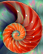 Sea Shell Digital Art Prints - Nautilus Shell - Natures Perfection Print by Sharon Cummings