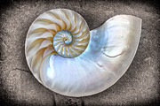 Shell Texture Posters - Nautilus Shell On A Textured Background Poster by Mimi Ditchie