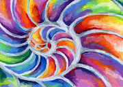 Sea Shell Painting Prints - Nautilus Print by Stephen Anderson