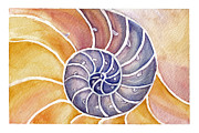 Shell Pattern Framed Prints - Nautilus Framed Print by Tricia Griffith
