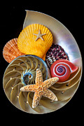 Aquatic Life Framed Prints - Nautilus with sea shells Framed Print by Garry Gay