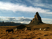 Jeff Brunton Metal Prints - Navajo Horses at El Capitan Metal Print by Jeff Brunton