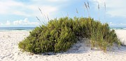 Pensacola Beach Prints - Navarre Florida Print by JC Findley