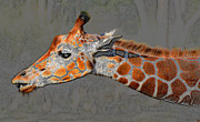 African Giraffe Art Prints - Neck of the Giraffe Print by David Lee Thompson