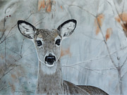 Mule Deer Pastels Posters - Need A Little Doe? Poster by Joni Beinborn