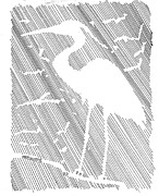 Bernadette Crotty - Negative Space Heron