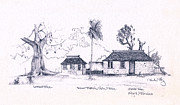 Pencil Sketch Prints - Negril Trees Print by Paul Gaj