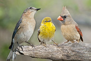 Warbler Photos - Neighbors by Bonnie Barry