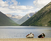 Barbara Smith Metal Prints - Nelson Lakes New Zealand Metal Print by Barbara Smith