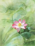 Floral Watercolor Painting Originals - Nelumbo by Robert Hooper