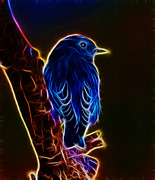 Birds - Neon Bluebird by Shane Bechler