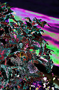 Tag Digital Art - Neon Coleus by Sylvia Thornton