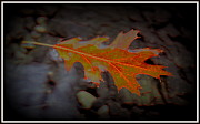 Autumn Leaf On Water Prints - Neon Leaf Afloat Print by Greg Thiemeyer