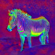 Jane Schnetlage - Neon Zebra