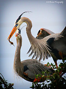 Florida Nature Photography Originals - Nestbuilding by Barbara Bowen