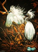 Al Brown - Nesting Egrets