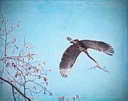 Bare Trees Mixed Media Metal Prints - Nesting Heron Metal Print by Peggy Collins