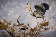 Nesting Time Print by Debra and Dave Vanderlaan
