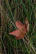 Fallen Leaf Photos - Networked by Odd Jeppesen