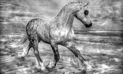 Equine Mixed Media Prints - Neutrality  Print by Betsy A Cutler East Coast Barrier Islands