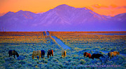 Jeanne  Bencich-Nations - Wild Horse Country