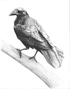 Raven Drawings Prints - Nevermore Print by Reppard Powers