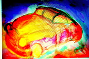 Neuroscience Paintings - New Car by Hilde Widerberg