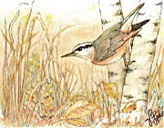VLee Watson - New Day Nuthatch