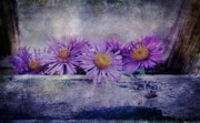 Black Background Mixed Media - New England Aster  by Todd and candice Dailey