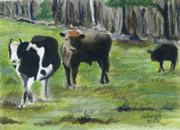 Cows Mixed Media - New England Cows by Christine Winship