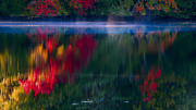 Fall Photos Posters - New England Fall Abstract Poster by Dapixara photos