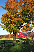 Red Barn Posters - New England Farm Fall Foliage Poster by Edward Fielding