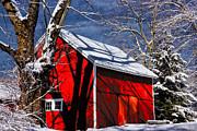 Karol  Livote - New England Winter