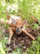 Angie Rea - New Fawn in the Forest