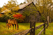 Randall Branham - New Foal Old Home Place