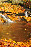 Fall Colors Autumn Colors Posters - New Hampshire Stream Poster by Catherine Reusch  Daley