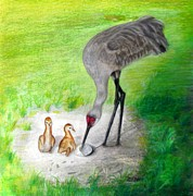 Cranes Drawings Framed Prints - New Hatchlings Sandhill Crane Chicks Framed Print by Zulfiya Stromberg